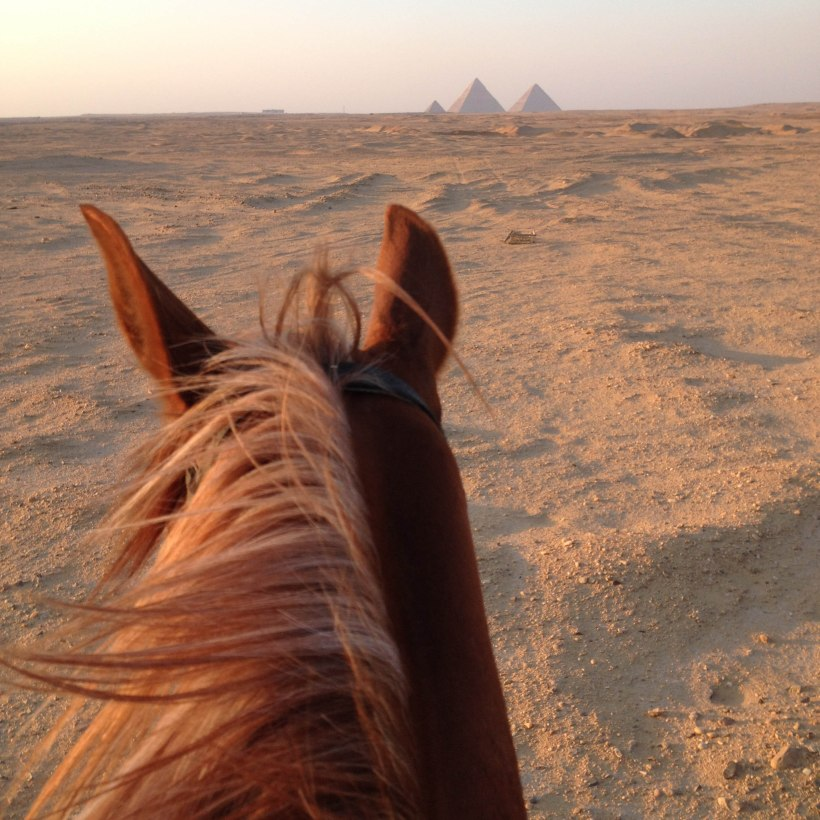 Horses view of the Pyramids